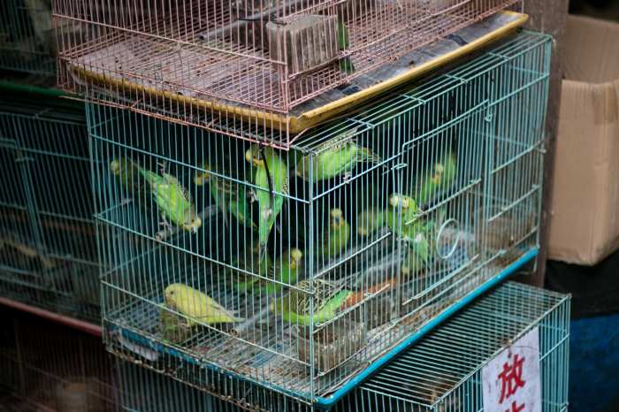 hong-kong-travel-bird-market