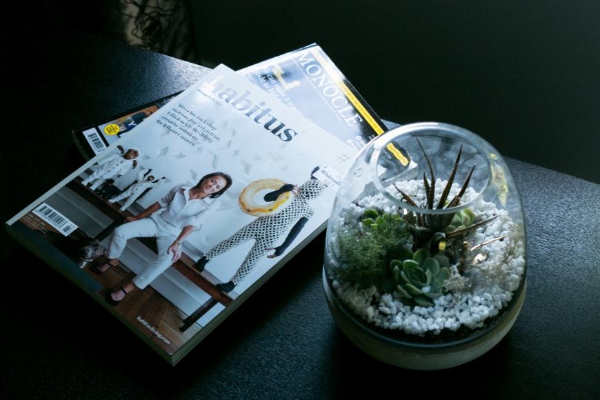 terrarium-succulent-new-zealand
